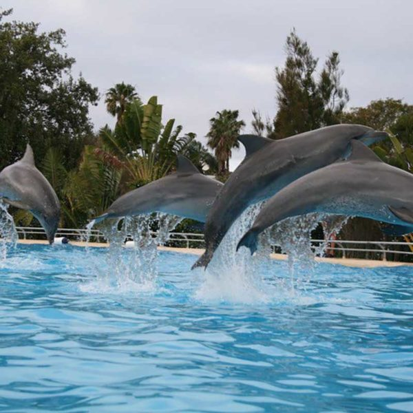 Coffs Harbour Attractions, Dolphin Marine Magic